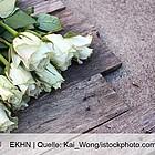 Weiße Rosen stehen ebenso für Neuanfang wie für Abschied.
